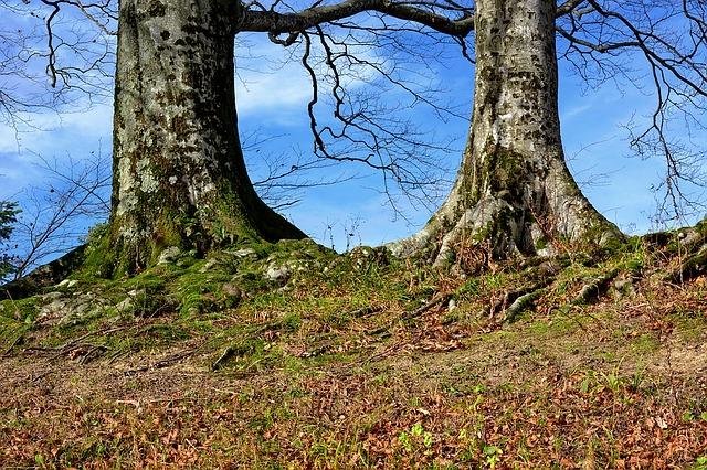 tree-1053191_640