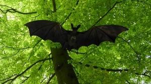 bat-1408452_1280