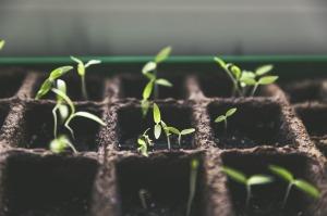 plant-1474807_1280