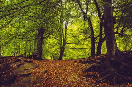 forest-path-2825114_1280